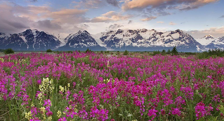 Trek To Valley Of Flowers A Must Have Experience For 2020